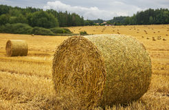 Harvest field with straw bale - close up. Stock Photos