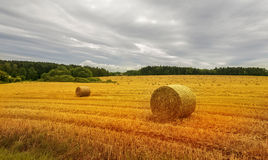 Harvest field with straw bales. Royalty Free Stock Image