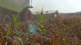 Harvest in a field of wheat stock footage