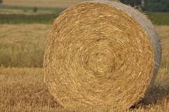 Harvest in the fields. Straw bales collapsed. Royalty Free Stock Photo
