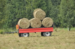 Harvest in the fields. Straw bales collapsed. Royalty Free Stock Photography