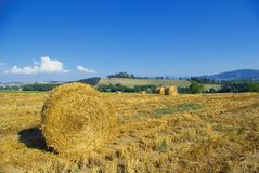 Harvest Fields With Straw In T Royalty Free Stock Images