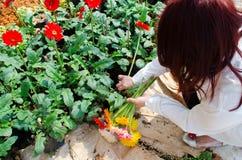 Harvest flower Stock Image