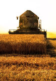 Harvest in a focus Royalty Free Stock Photo