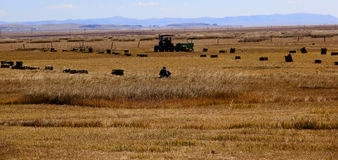 Harvest forage in the grassland Royalty Free Stock Photos