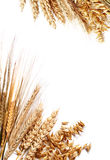 Harvest frame Royalty Free Stock Image
