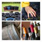 Harvest in a French winery Royalty Free Stock Photos
