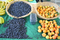 Harvest of fresh acai berries Royalty Free Stock Images