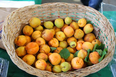 Harvest of fresh apricots Royalty Free Stock Photos