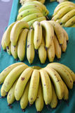 Harvest of fresh bananas Royalty Free Stock Images