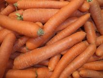 Harvest of fresh carrots royalty free stock images