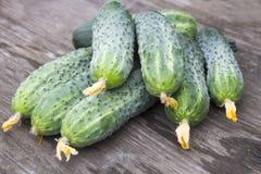 Harvest of fresh cucumbers Stock Image