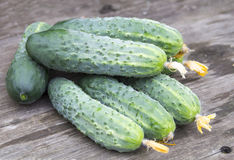 Harvest of fresh cucumbers Stock Photography