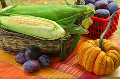Harvest. Fresh picked corn, plums and squash for a Fall harvest Stock Photography