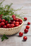 Harvest fresh red cranberries in wicker basket. Selective focus Stock Photography