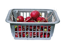 Harvest of fresh red radishes in a plastic box isolated Royalty Free Stock Photography