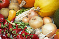 Harvest. Fresh ripe vegetables Royalty Free Stock Photos