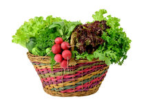 Harvest of fresh spring vegetables and herbs in a basket. Royalty Free Stock Photography
