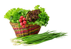 Harvest of fresh spring vegetables and herbs in a basket. Stock Photo