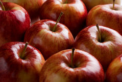 Red apples. Harvest Fresh sweet Red Apples Royalty Free Stock Image