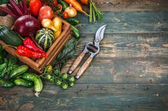 Harvest fresh vegetables on old wooden board Stock Photos