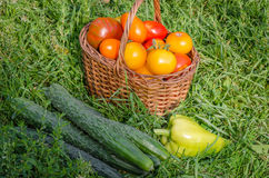 The harvest of fresh vegetables Royalty Free Stock Photography