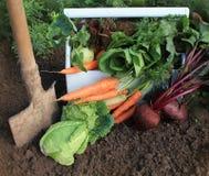 Harvest of fresh vegetables. And shovel Stock Photography