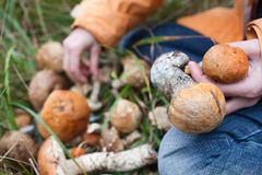 Harvest of fresh wild mushrooms Stock Photos