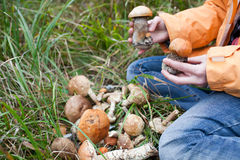 Harvest of fresh wild mushrooms Stock Images