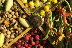 Harvest Fruits 1 Stock Images