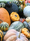 Harvest Garden. Collection of every kind gourd and melon that can come out of a garden is stacked up Royalty Free Stock Photo
