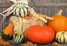 Harvest Gourds Stock Photos