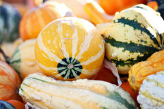 Harvest Gourds Royalty Free Stock Photography