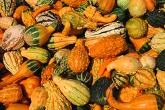 Harvest Gourds royalty free stock image
