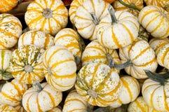 Harvest Gourds fo Halloween Stock Photos