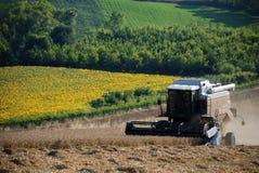 Harvest grain Stock Photo