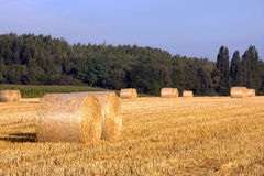 Harvest 2013 Royalty Free Stock Photography