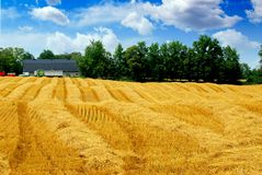 Harvest grain field Royalty Free Stock Photography