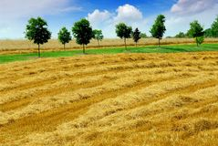 Harvest grain field Stock Photography