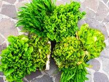Harvest of green fresh vegetables stock photos