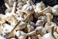 Harvest grey white heads of garlic stock photos