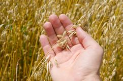 Harvest in hand Stock Photography