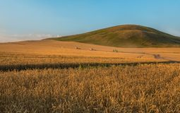 Harvest. Harvesters are moving to night cleaning. The wheat ripened. royalty free stock images