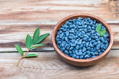 Harvest of Haskap berries blue berries stock images