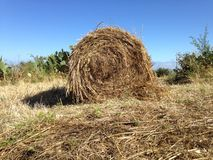 Harvest, hay balls Royalty Free Stock Images
