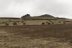 Harvest, hay balls Stock Photography