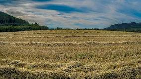 Harvest hay Stock Photos