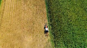 Harvest of hay, tractor using rotary rakes on agriculture crops. Aerial view, drone view royalty free stock photo