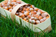 Harvest of hazelnuts in a wicker basket made of birch bark on the green grass Royalty Free Stock Photography