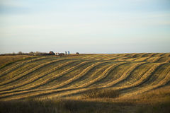 Harvest Hills. An Alberta evening sunset shot, rolling hills of a farmers swathed field inn late October 2015 Stock Photography